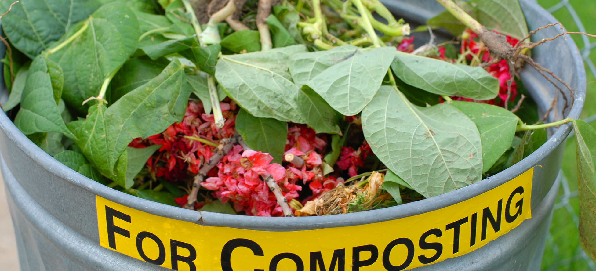 Metal container with plant clippings and food intended for compost pile